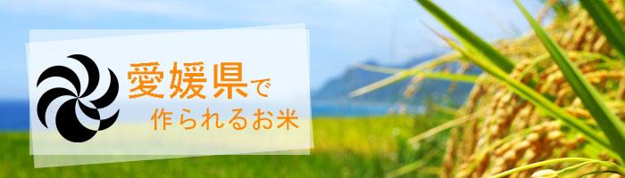愛媛県の特徴