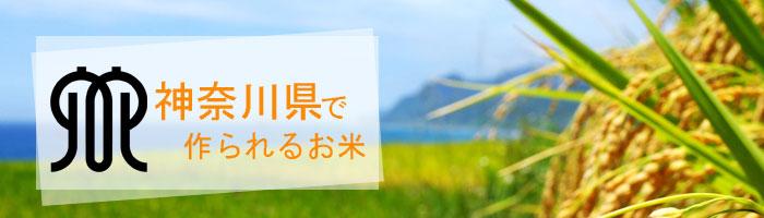神奈川県の特徴